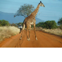 Umbrella Investment and Safaris in Kenia