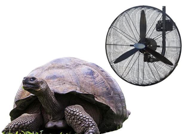 Oscillating Wall Fans – keeping everyone cool