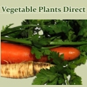 Vegetable Plants Direct