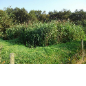 sewage treatment with Reedbeds