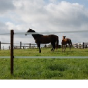 Equestrian & Agricultural Electric Fencing